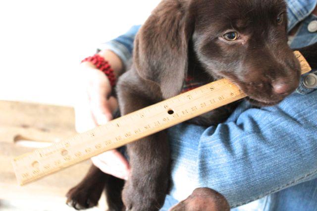 Charlie 13 weeks ruler