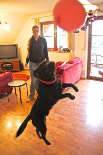 Charlie chasing a balloon